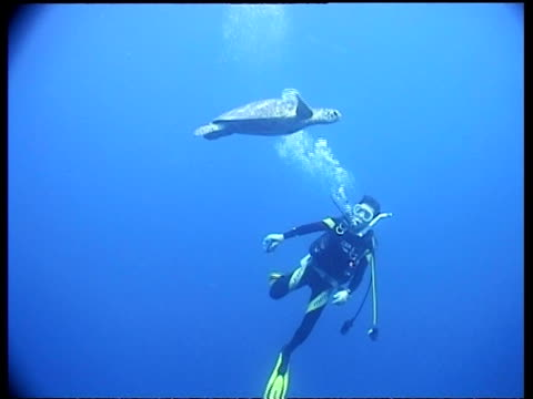 MS Green Turtle hovers above diver, with camera, Sipadan, Borneo, Malaysia