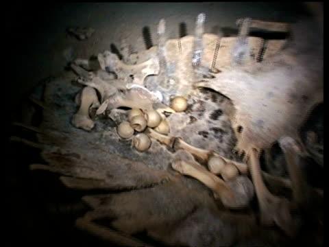 ms green turtle skeleton with eggs in tomb, sipadan, borneo, malaysia - green turtle stock videos and b-roll footage