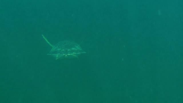 vídeos de stock, filmes e b-roll de tartaruga marinha verde nadando em alta definição - territórios ultramarinos franceses