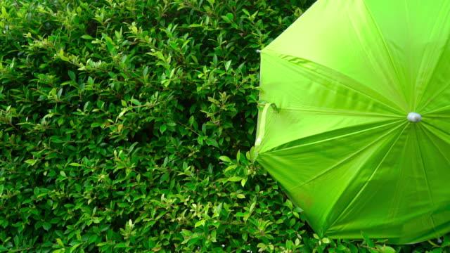 un ombrello verde su sfondo foglie verdi. - ombrello video stock e b–roll