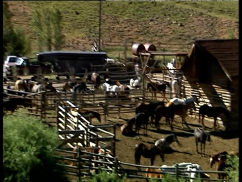 stockvideo's en b-roll-footage met green valley with trees tilt down to ranch with horses in paddock - agrarisch beroep