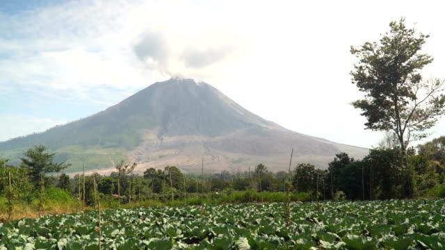 vídeos y material grabado en eventos de stock de plantas vegetales verdes, el jardín tiene grandes hojas de repollo cerca de mt.sinabung - monte sinabung