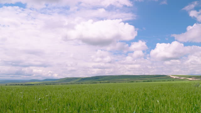green wheat agricultural field, cloudy sky, springtime, slow motion - bulgaria stock videos & royalty-free footage