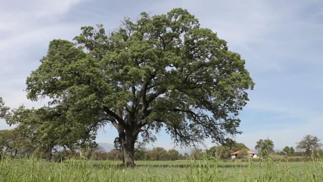 vídeos y material grabado en eventos de stock de verde trigo campo viento en altas cerca de antalya, turquía - selimaksan