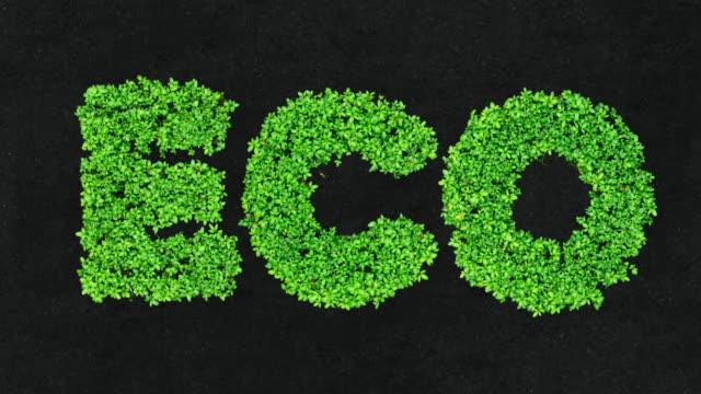 greenery – 4k time lapse loop growing seeds eco letters - e post bildbanksvideor och videomaterial från bakom kulisserna