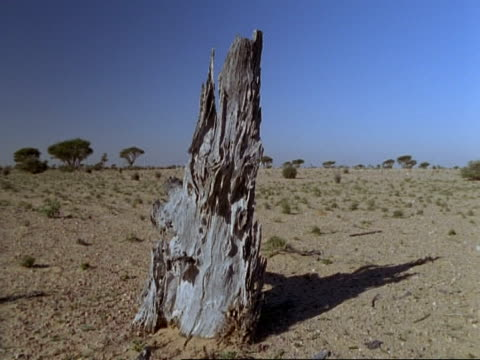 greenery in desert (incl. young plants), oman - ceppaia video stock e b–roll