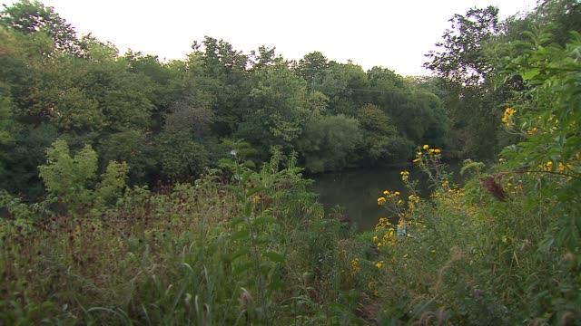 greenery near river with cicadas buzzing at horner park on september 12, 2013 in chicago, illinois - ブンブン鳴る点の映像素材/bロール