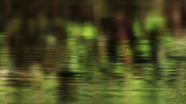 greenery reflected onto gently flowing river, nottinghamshire, england - flowing water stock videos & royalty-free footage