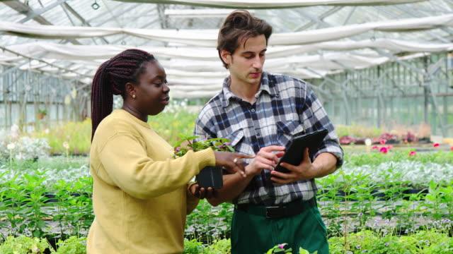 greenhouse employees examining saplings in nursery - centro per il giardinaggio video stock e b–roll