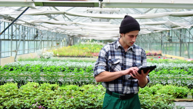 greenhouse farm worker using a digital tablet - retail occupation stock videos & royalty-free footage
