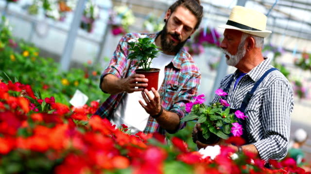 greenhouse florist at work. - formal garden stock videos and b-roll footage