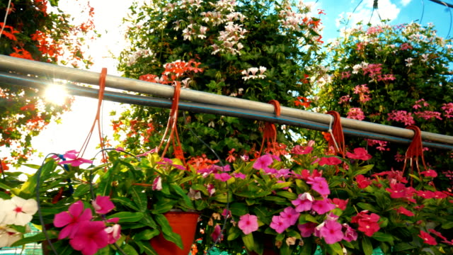 greenhouse flower nursery. - pot plant stock videos and b-roll footage