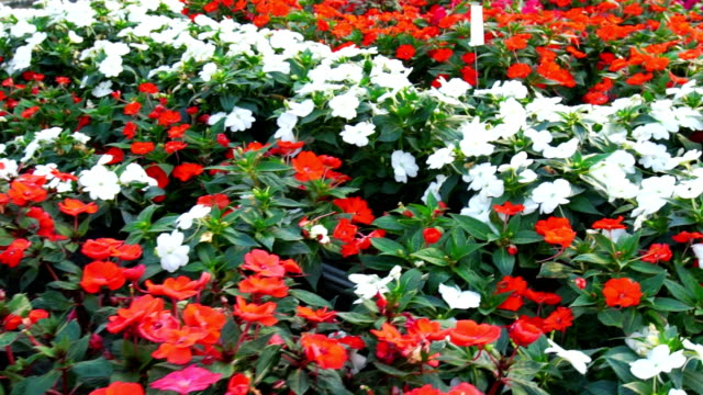 greenhouse flower shop flyover - tropical flower stock videos and b-roll footage