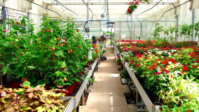 greenhouse flowers. - greenhouse stock videos & royalty-free footage