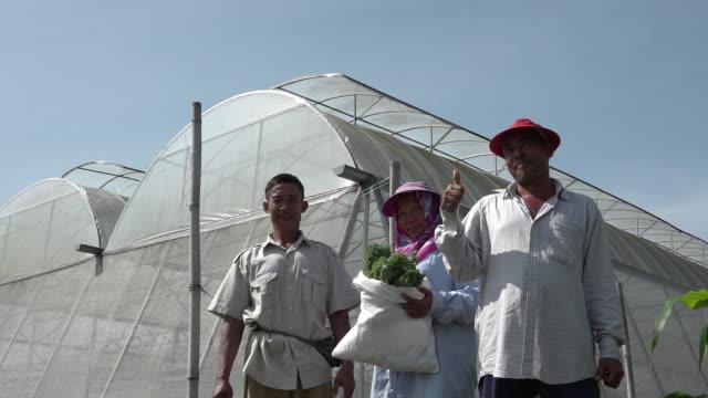 vídeos y material grabado en eventos de stock de invernadero en malasia - empresa de carácter social