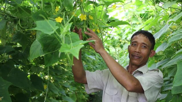 vídeos de stock e filmes b-roll de greenhouse in malaysia video - só homens maduros