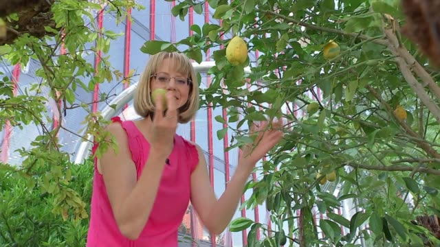 greenhouse installed in stratford for london design festival england london stratford ext je ahn interview sot tom massey examining plants in... - citrus fruit stock videos & royalty-free footage