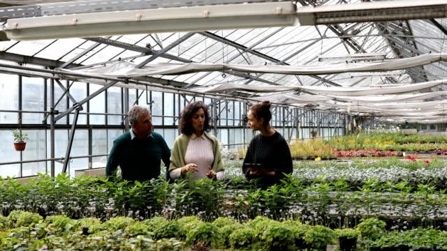 gewächshauskrippe informiert kunden über die pflanzen - land stock-videos und b-roll-filmmaterial