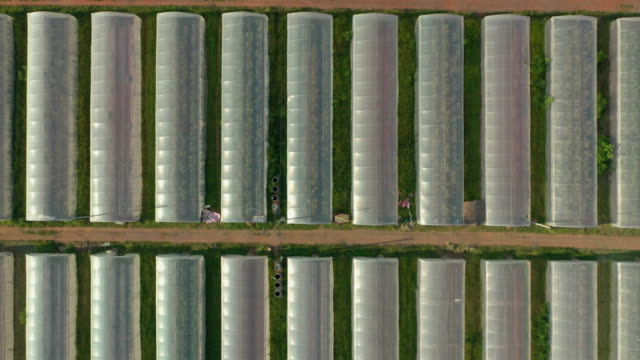greenhouse planting farm in top view - greenhouse stock videos & royalty-free footage