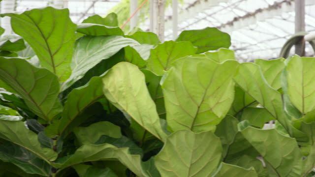 greenhouse plants - plant nursery stock videos and b-roll footage