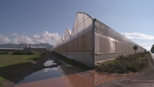 MS Greenhouse Tomato Culture at Cabo de Gata / Nijar, Andalusia, Spain
