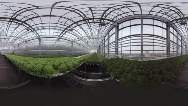 greenhouse - monoscopic image stock videos & royalty-free footage