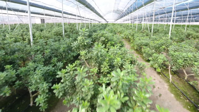 greenhouse - garden center stock videos and b-roll footage