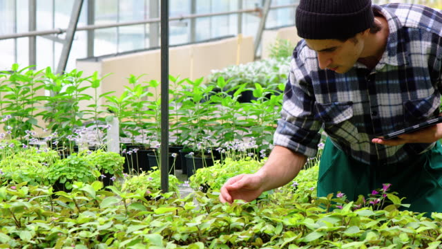 greenhouse worker doing a quality check of plants - greenhouse stock videos & royalty-free footage