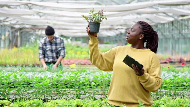 植物を調べる温室労働者 - 園芸学点の映像素材/bロール