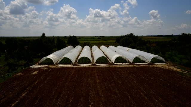 Greenhouses in the organic farm