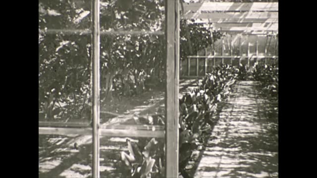 greenhouses in the westland area of holland / internal shot of the greenhouse / holding a blank card / man stands in front of greenhouses with card... - orticoltura video stock e b–roll