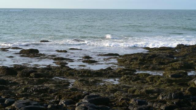 vídeos de stock, filmes e b-roll de mar da groenlândia - alga marinha