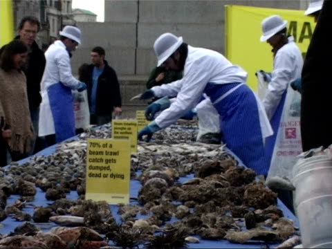 greenpeace fishing demonstration in trafalgar square; general views of fish laid out on tables / protestor wearing sandwich board labelled 'stamp out... - greenpeace stock videos & royalty-free footage