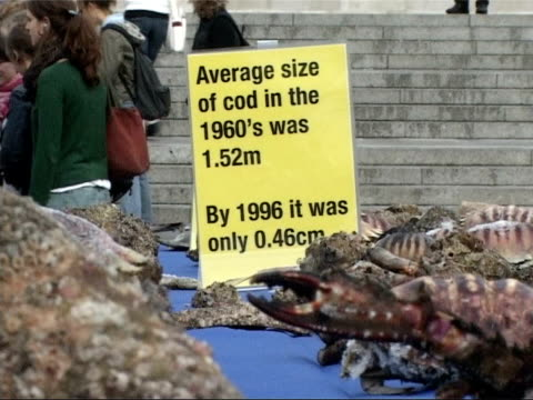 vídeos de stock, filmes e b-roll de greenpeace fishing demonstration in trafalgar square greenpeace volunteers laying out small fish and sea creatures on tables covered in blue... - toalha de mesa