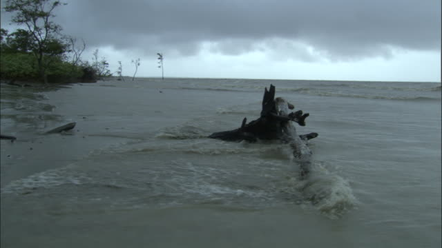 grey clouds cover the sky as waves wash over a piece of driftwood on a beach. available in hd. - 沿岸点の映像素材/bロール