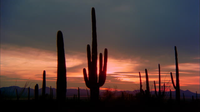 grey clouds move through the orange sky over organ pipe cacti national monument. - südwestliche bundesstaaten der usa stock-videos und b-roll-filmmaterial