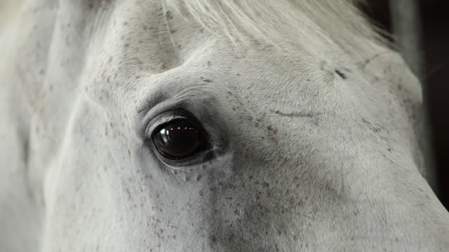 CU Grey horse's eye