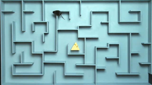 ha, ws, grey mouse finding peace of cheese in maze - trapped stock videos & royalty-free footage