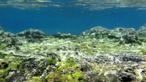 vídeos de stock, filmes e b-roll de grey mullet no raso oceano atlântico aos açores - oceano atlântico