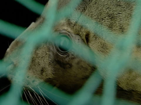 Grey Seal, Bin box, through net, protection, preservation