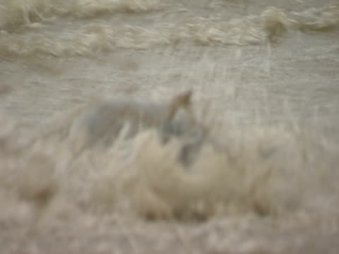 grey seal, preparing to swim, splashing, escapism, playful - north east england stock videos & royalty-free footage