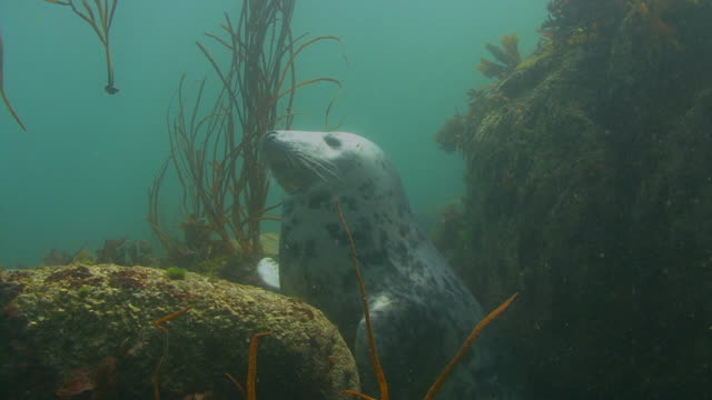 grey seal - grey seal stock videos and b-roll footage