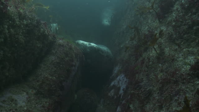 grey seals hiding in crevice - seascape stock videos & royalty-free footage