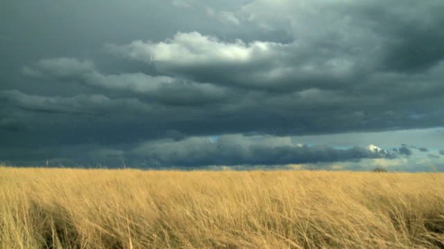 Grey storm clouds over African Savannah