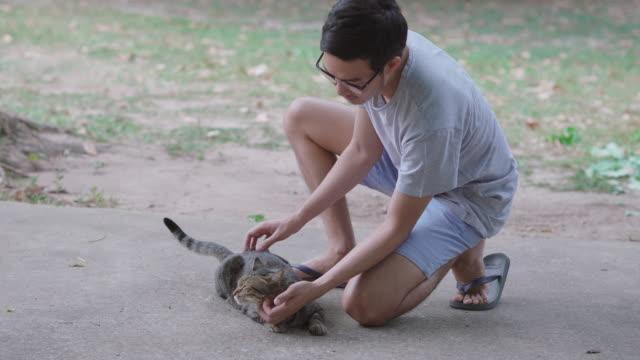 灰色のタビー猫はこすり付けられるのを楽しむ - 30代点の映像素材/bロール