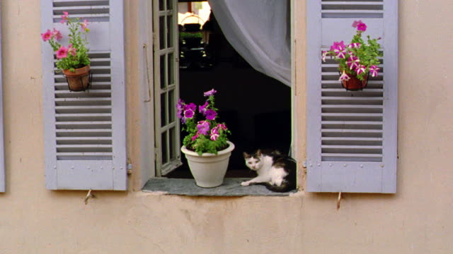 Grey + white cat lying down on shuttered windowsill next to potted flowers / Provence, France