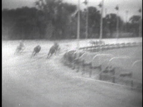 greyhounds race at a track in sarasota, florida. - sports race stock videos & royalty-free footage