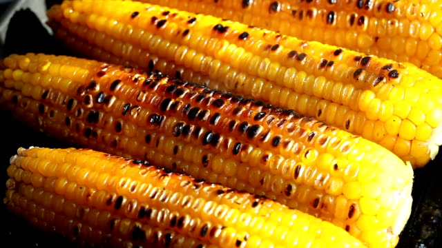 grilled corn - grilled stock videos and b-roll footage