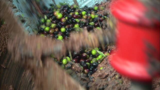 Grinder for olives