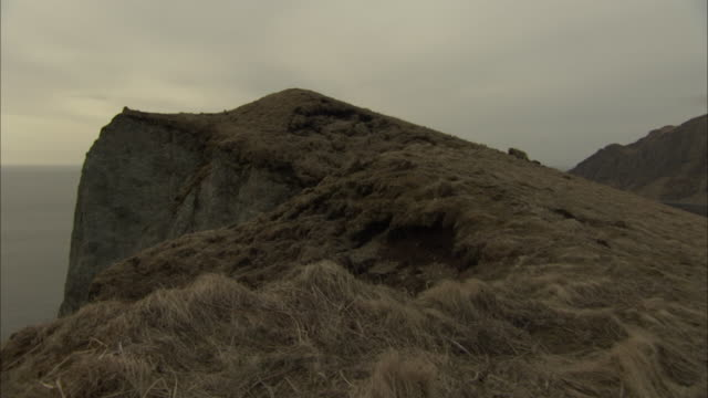 vidéos et rushes de a grizzly bear prowls a grassy, coastal cliff. - cliff